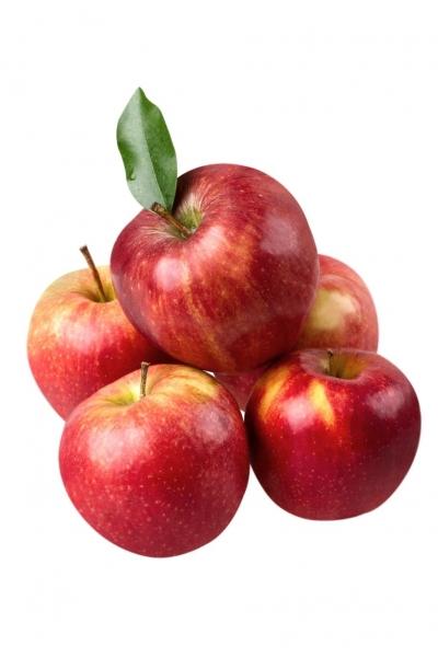 1kg ungespritzte Äpfel aus unserem Garten